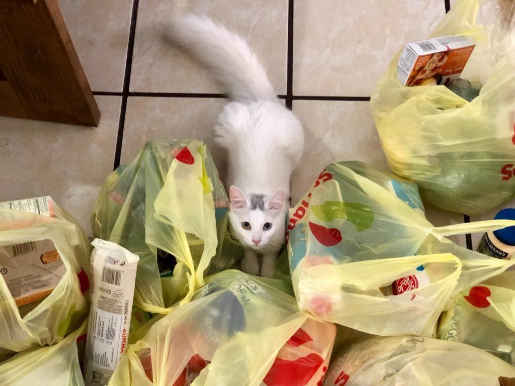塑膠袋充滿我們的生活