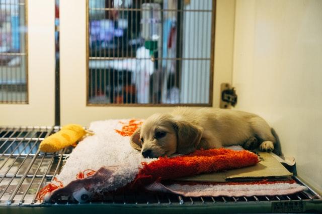 斷捨離物品怎麼處理:毛巾、毛毯回收丟棄捐贈、動物保護、動保團體